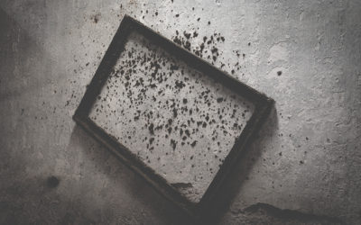 When is Black Mold Treatment Needed?